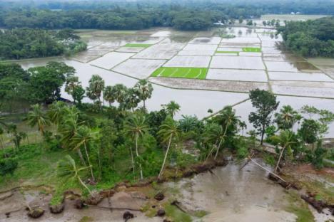 Mangroves Save Millions